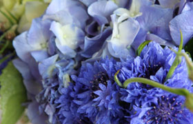 Cornflower and Hydrangea blue flowers
