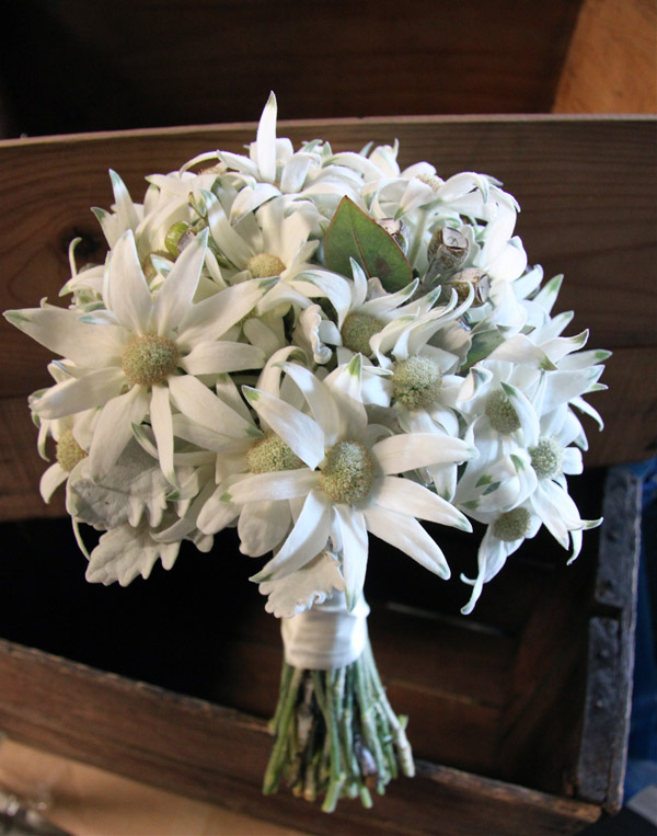 Sydney wedding flowers flannel flower bouquet