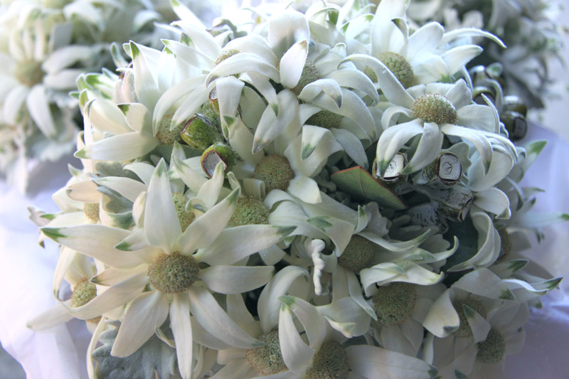 Wedding Australian Native Flowers Butterfly Philosophy Flannel Flower Bouquet Artificial